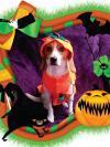 Maggie the Beagle in a pumpkin costume